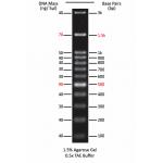 100 bp DNA Ladder II (500 μl)