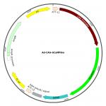Adenovirus CAG-GCaMP6m (200 µl)
