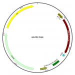 Adenovirus FLAG (200 µl)