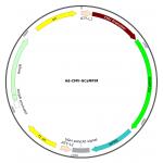 Adenovirus GCaMP6f (200 µl)