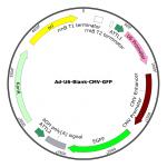 Adenovirus U6-Blank-GFP  (200 µl)