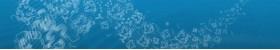 IntactProtein™ Cell-Tissue Lysis Kit