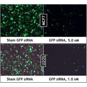 GreenFect™ Transfection Reagent (0.75 ml)
