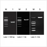 2× LiTaq™ Eco PCR Master Mix (+Dye) (Free Sample)