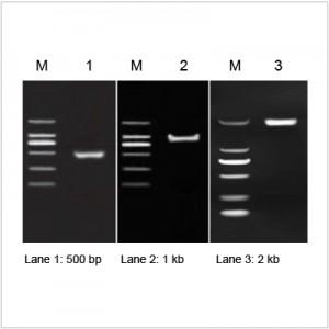 2× LiTaq™ Eco PCR Master Mix (+Dye) (100 ml)