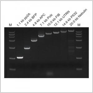 LiScript™ First-Strand cDNA Synthesis Kit (+gDNA wiper) (50 rxn)