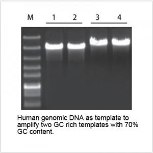 2× LiSpark™ Ultra SuFi PCR Master Mix (1 ml)