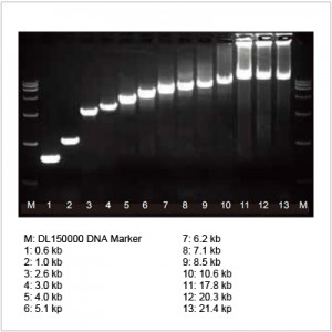 2× LiSpark™ Max SuFi PCR Master Mix (5 ml)