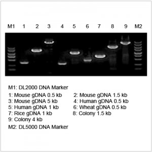 2× LiTaq™ Plus PCR Master Mix (+Dye) (5 plates)