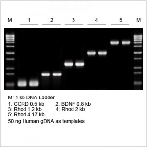2× LiTaq™ PCR Master Mix (-Dye) (15 ml)