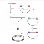 LiClone™ One Step DNA Assembly Kit (25 rxns)