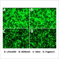 LiFect293™ Transfection Reagent (1 ml)..