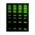 LiGreen™ Ultra Nucleic Acid Gel Stain (500 μl)