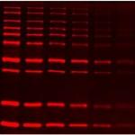 SuperLumin™ Protein Gel Stain (1 ml)