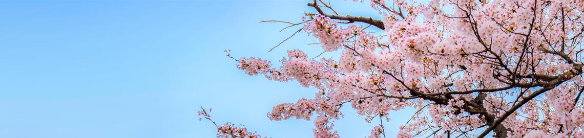 homepage-slide-spring-promotion